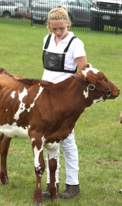 Sandra Mravlja of Worcester was doing double-duty this morning at the Junior Livestock Show.  She is Otsego County dairy princess, and was also showing Jayde in the competition.