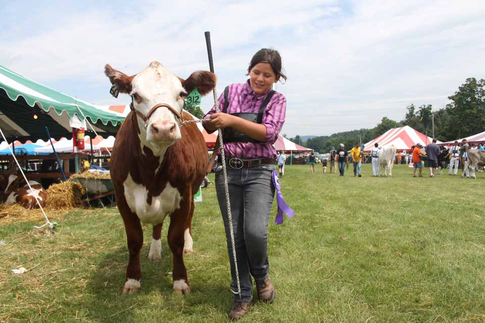 Emily Hammond of Gilbertsville leads Miss Sensation back to her stall after the Hereford won best of breed at the Junior Livestock Show this morning.  (Jim Kevlin/allotsego.com)
