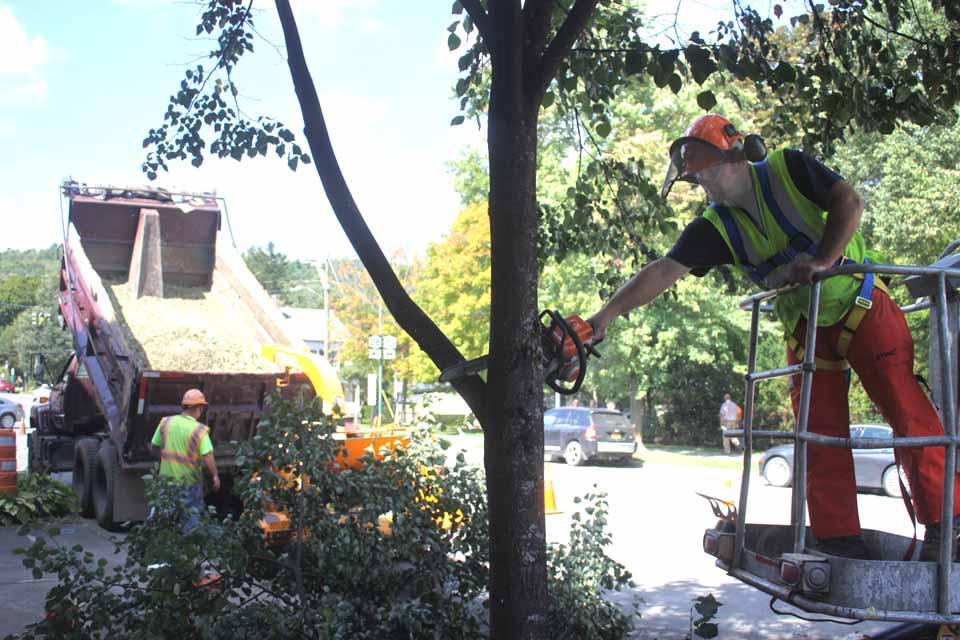Scott Capes of Central Paving, Ilion, this morning began felling the trees on the south side of Cooperstown's Main Street, in preparation for resumption of the $2 million sidewalk replacement project.    Trustee Cindy Falk, who chairs the Streets Committee, said the trees may remain for now in the block in front of the Baseball Hall of Fame, since Central Paving may not be able to get that far before next spring.  (Jim Kevlin/allotsego.com)