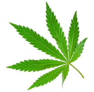 A marijuana leaf.