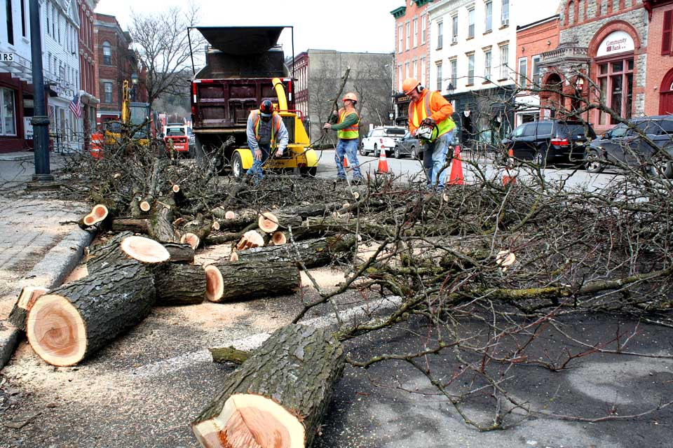 The final trees are coming down in downtown Cooperstown today as the push begins to complete the village's $2 million sidewalk project by Memorial Day Weekend.  Central Paving Vice President Charles Durse, who was at the scene today, said the start of work was delayed by the long winter, but he fully expects to meet the end-of-May deadline.  Assisting Durse in clearing away brush in front of the Cooperstown General Store a few minutes ago were  Greg Hight, foreground, and John  Sementilla, left.  (Jim Kevlin/allotsego.com)