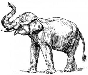 indian_elephant_116229
