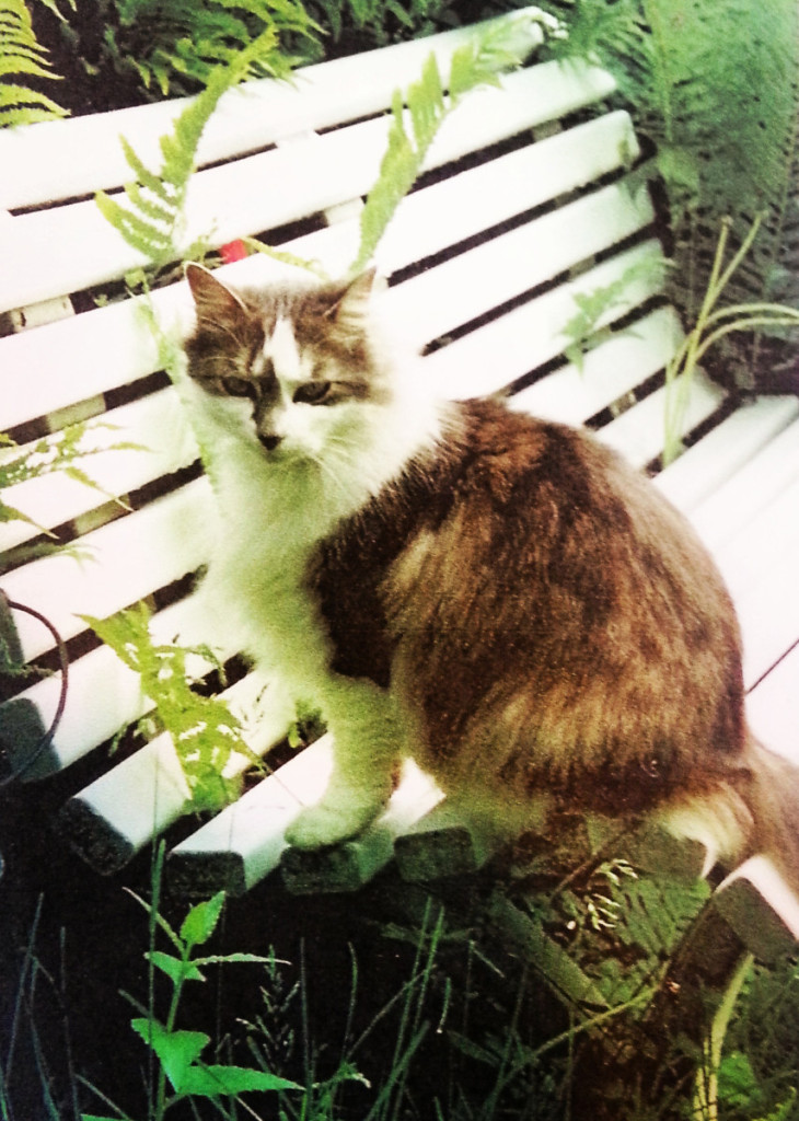 Bootsie the cat is a cooperstown feline that has recently gone missing.