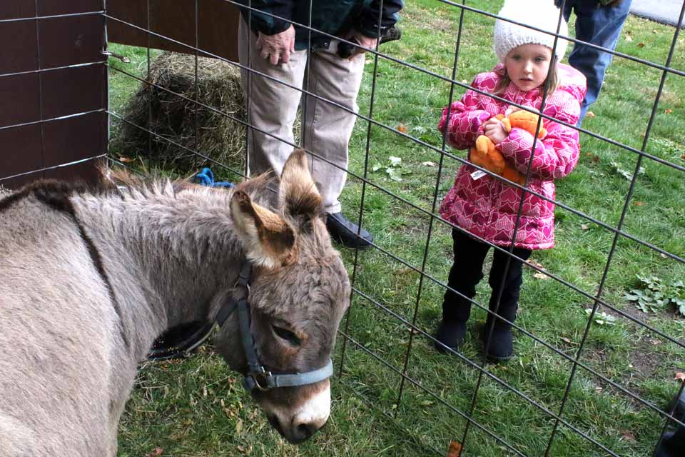 Rev. Bill Delia's granddaughter, Roslyn, 3, visiting from Florida, doesn't know what to make of the burro in front of Cooperstown Methodist, Chestnut and Main. The animal, which has a natural cross on the back of its neck, will be part of a Live Nativity planned 1-4 p.m. this afternoon. (Jim Kevlin/AllOTSEGO.com)