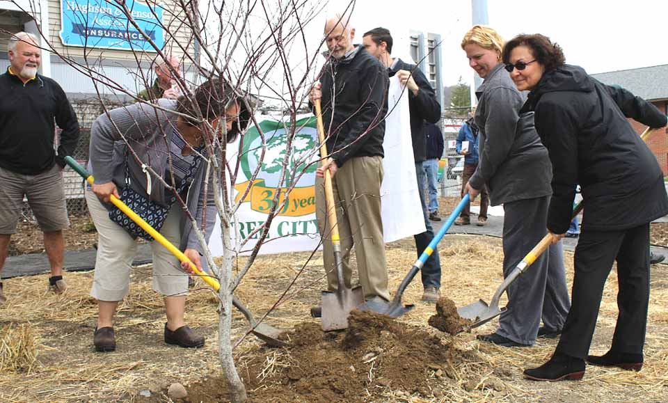 Oneonta Mayor Gary Herzig, center, and Common Council members, from left, Michelle Osterhoudt, Dana Levinson and Melissa Nicosia plan a Japanese maple at the new Miller Park, at the corner of Lettis Highway and Main Street. Looking on at left is Brian Fawcett of New Asbury Gardens, the landscape architect.  (Ian Austin/AllOTSEGO.com)