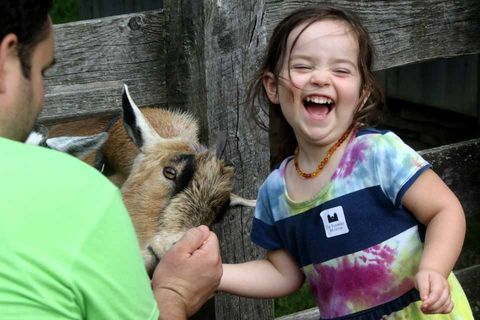 The Farmers' Museum's 38th annual Harvest Festival, which began today and continues 10-5 on Sunday, clearly delighted Layla Giles, 2 1/2, of Blenheim, who was feeding the goats with her dad Ben. (Jim Kevlin/AllOTSEGO.com)