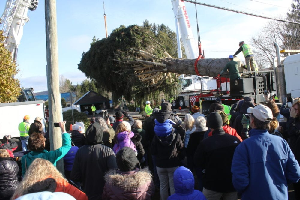 The crowd ooh and ahh'd as the Eichler's 94 foot tall spruce was cut and loaded onto a flatbed truck in front of their Country Club Road home this morning (Ian Austin/AllOTSEGO.com)