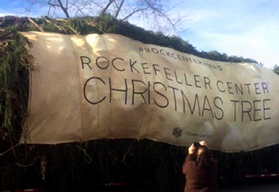The Eichlers' spruce tree was packaged and ready to head down I-88 to Rockefeller Center.  Oneonta's Patty Dresser snapped the image.