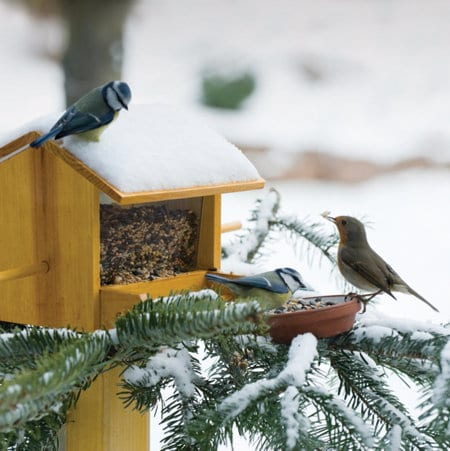 20150928-tsc-flocktoberfest-winter-birds-feeder-crop